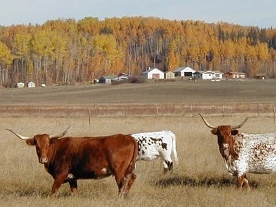 6 Exchange with Horse Creek Guest-Ranch, Fort Assiniboine, Alberta, Canada